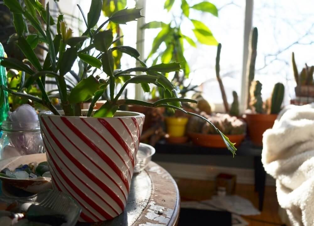 how to create a therapeutic indoor garden for someone with dementia