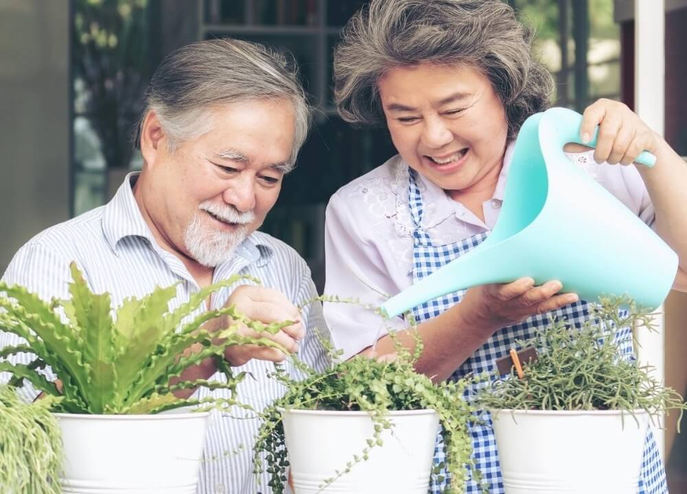 interaction with plants benefits people with dementia