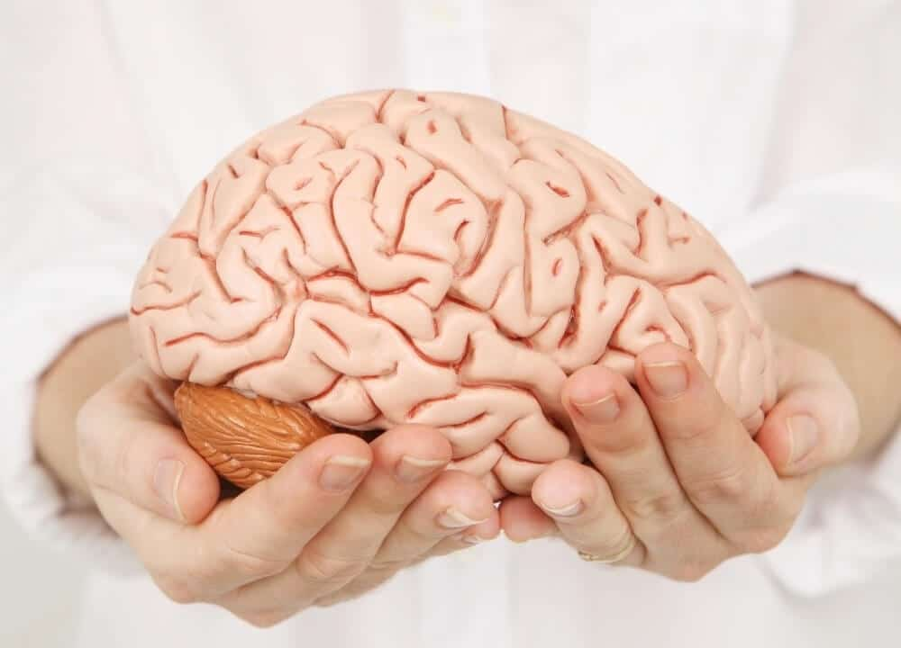 obesity affects aging and brain function