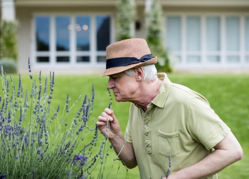 aromatherapy as an alternative therapies for dementia