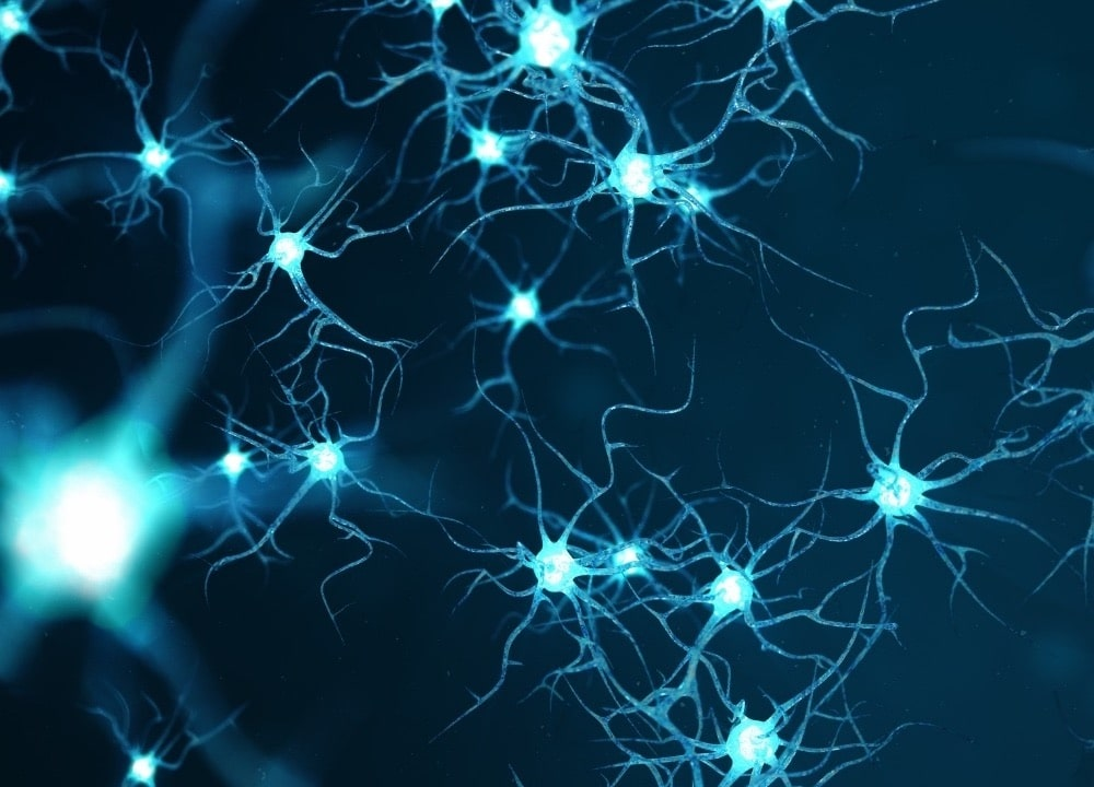 presence of neurons