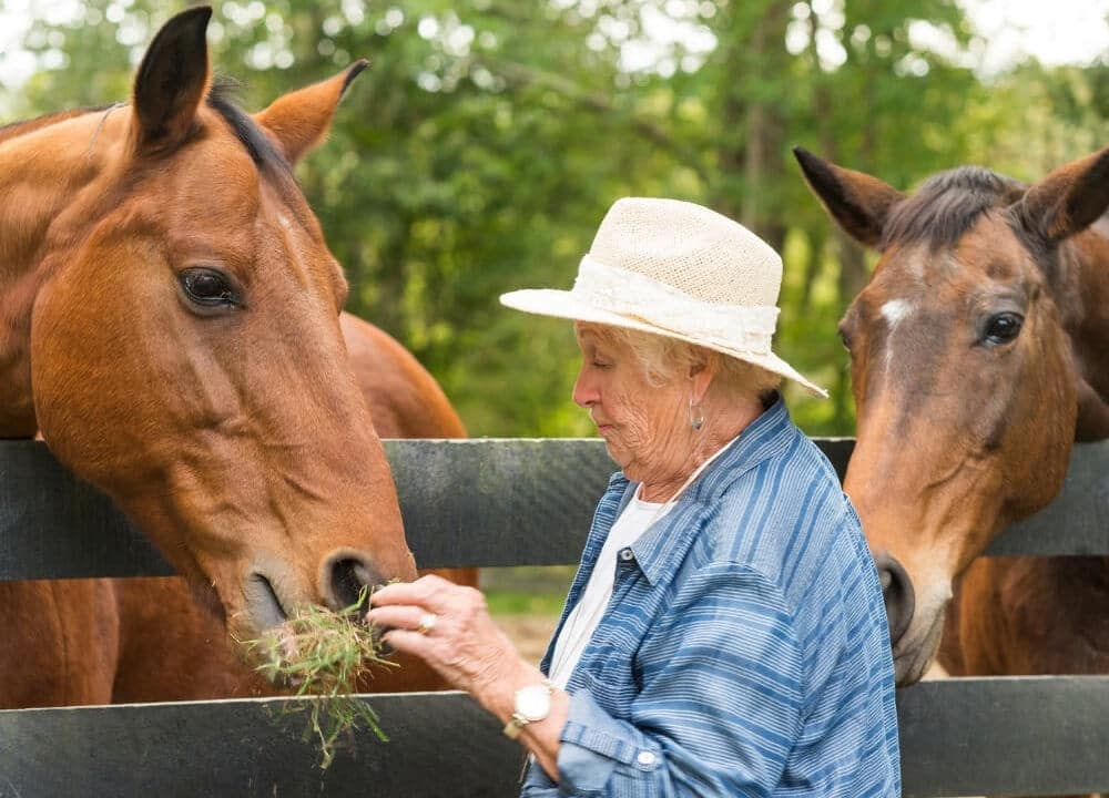 benefits of horse therapy for dementia