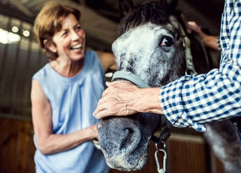 what makes horses ideal candidates for this therapy